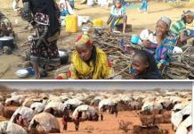 Dadaab, Somtribune